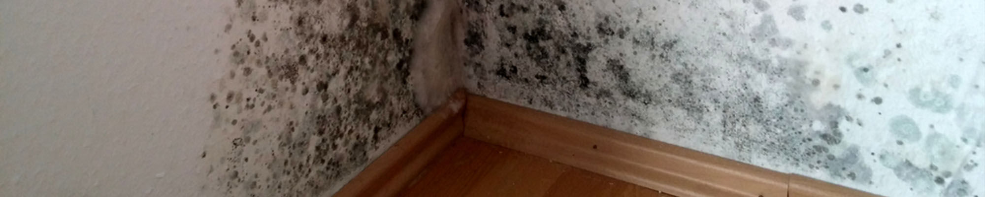 Condensation & black mould in room corner