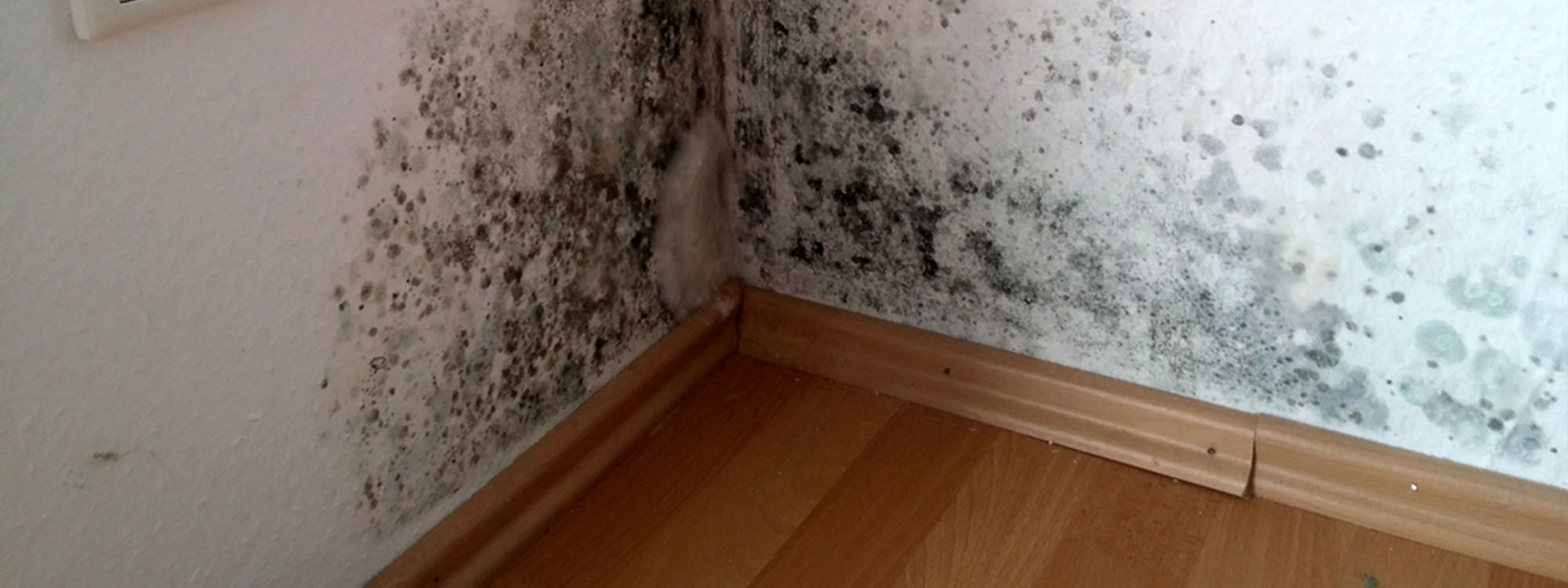 black mould in corner of room condensation