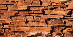 How To Spot Dry Rot